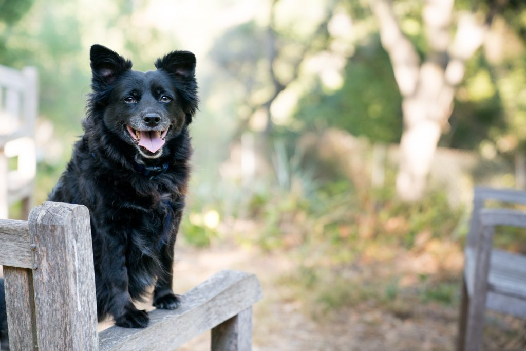 dog walking and the health benefits it provides in NZ