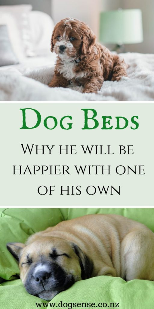 Dog Beds. Why your dog will be happier with his own bed