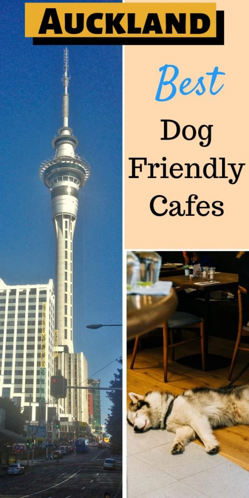 dog friendly cafes in Auckland New Zealand