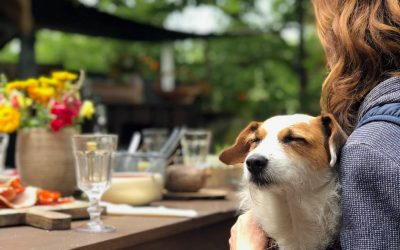 5 Of The Best Dog friendly cafes in Wellington