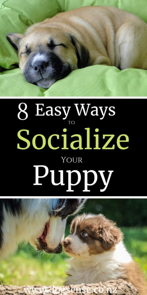 Easy ways to socialize your puppy dog