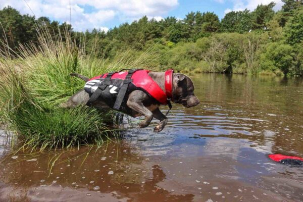 Dog using Floattaion device when jumping in river