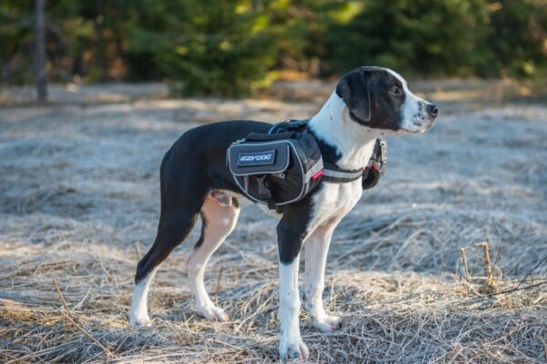 Dog wearing EzyDog Summit Backpack