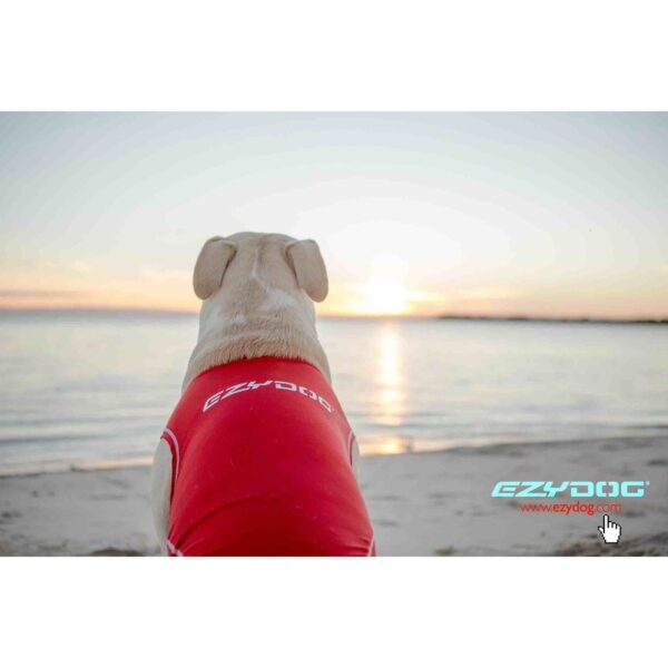 Dog wearing Rashie vest looking out to sea