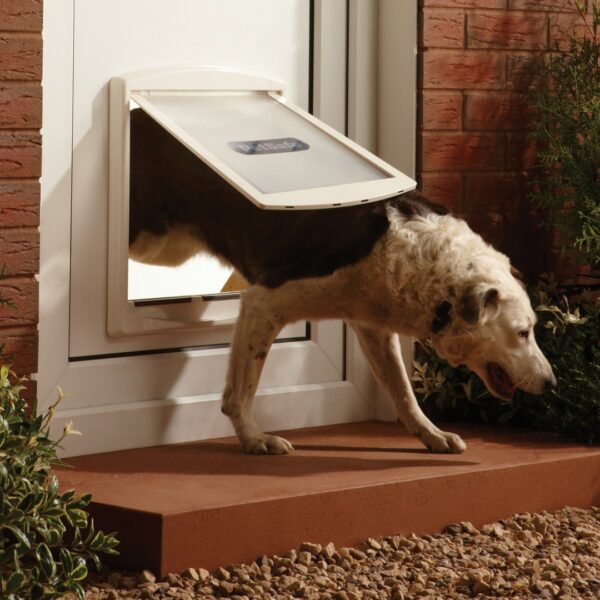 Large Dog using a 2 way dog door