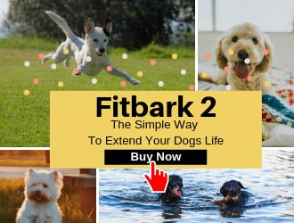 Images of healthy dogs after using the Fitbark 2 activity monitor