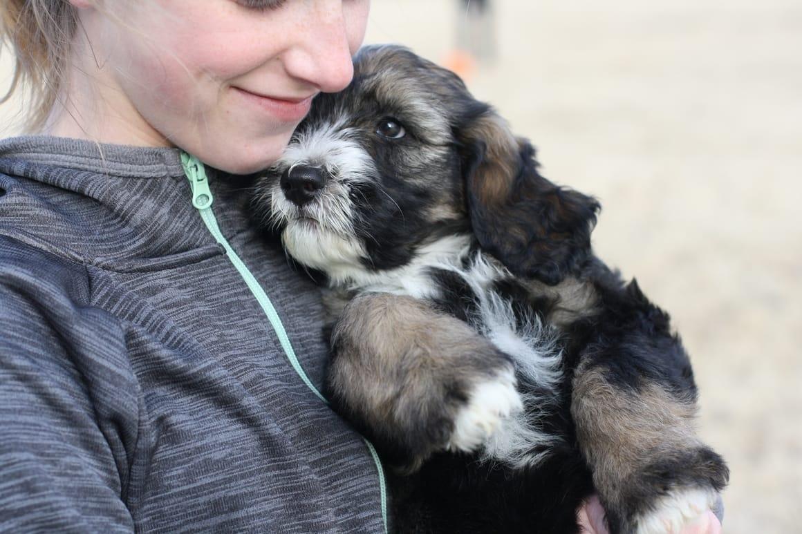 girl cuddling a puppy