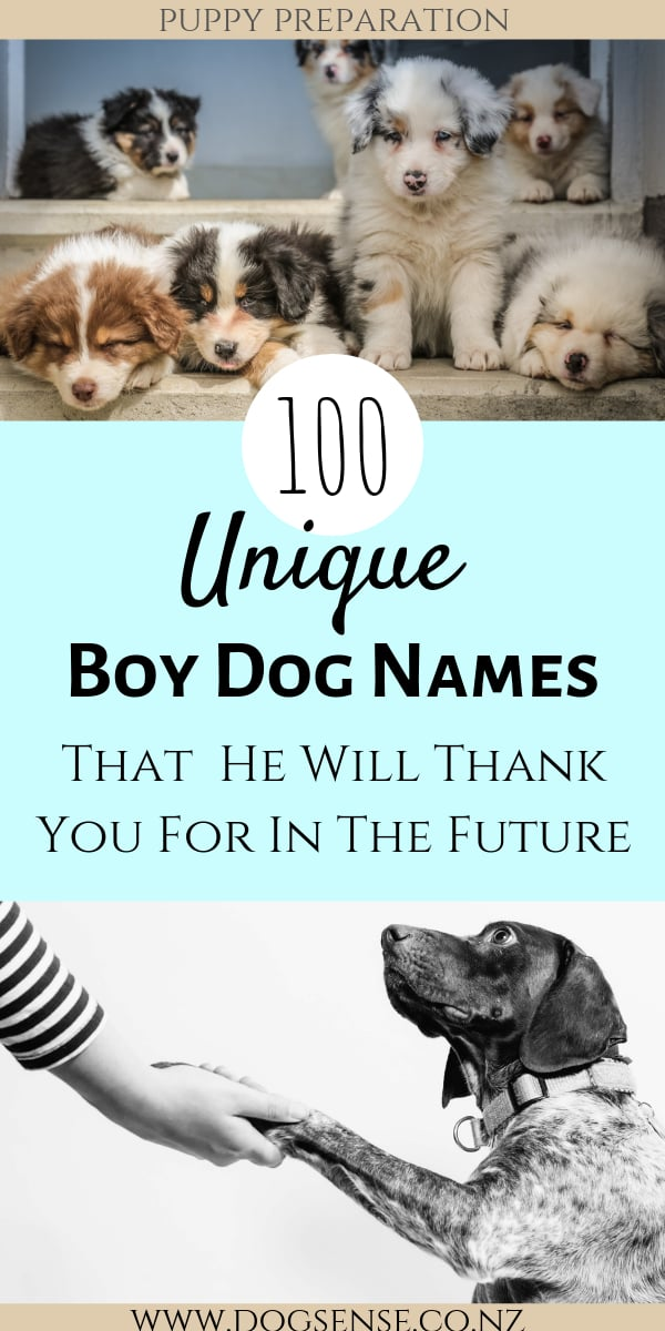 100+ Unique Boy Dog Names (& Meanings)That You Don't Hear
