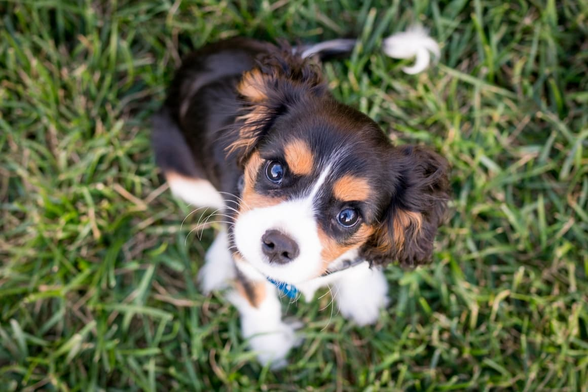 100 Unique Boy Dog Names Meanings That You Don T Hear Too Often