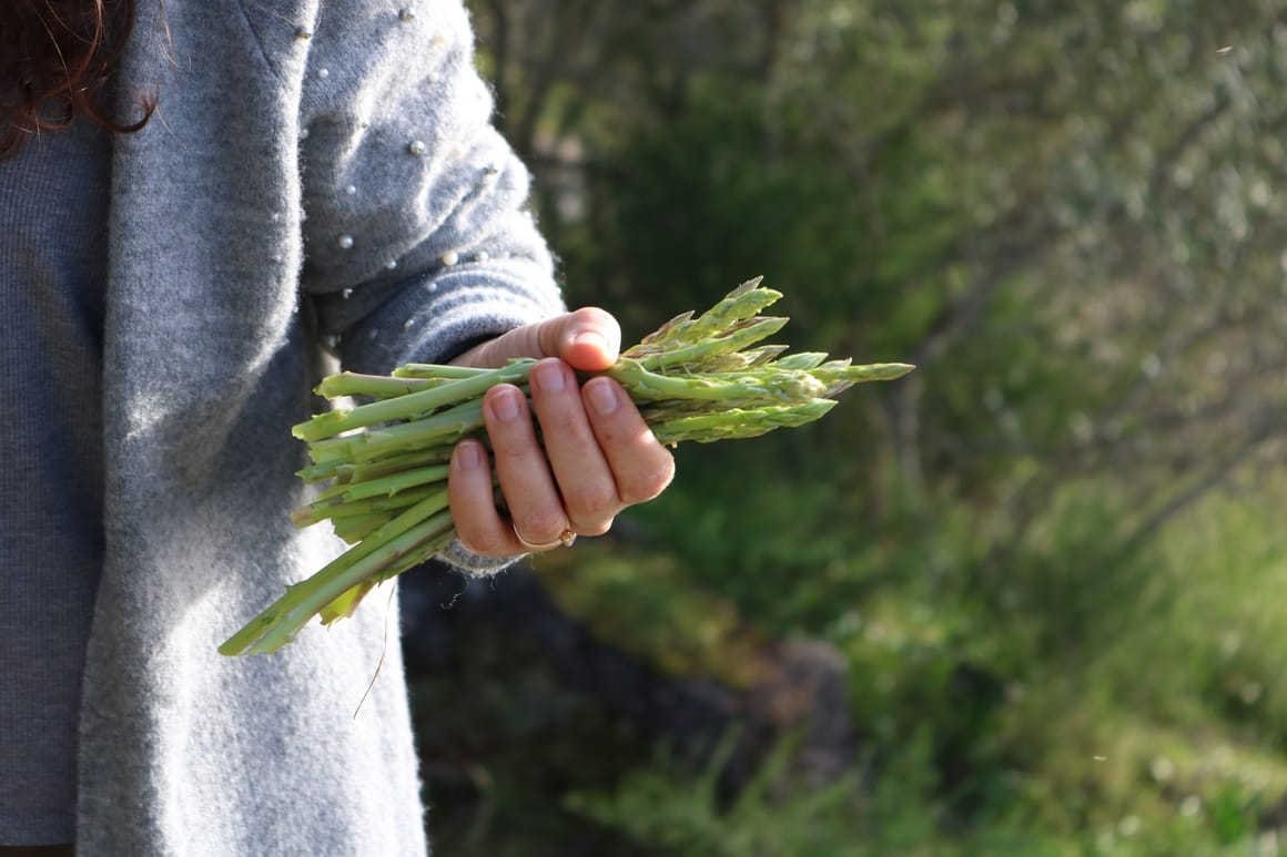 Woman holding a bunch of asparagus