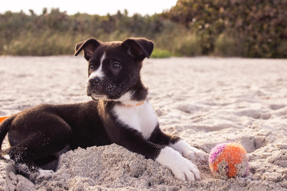Dog with a ball on the beach