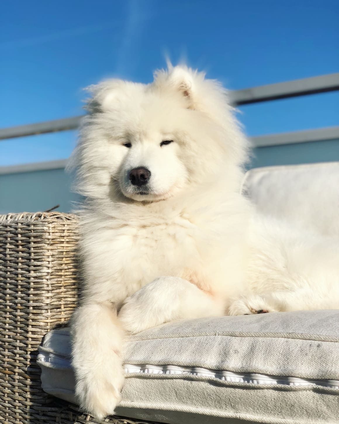 25 White Dog Breeds That Will Steal