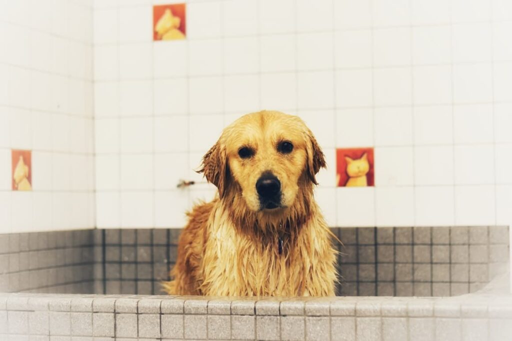 Wet Dog In The Bath