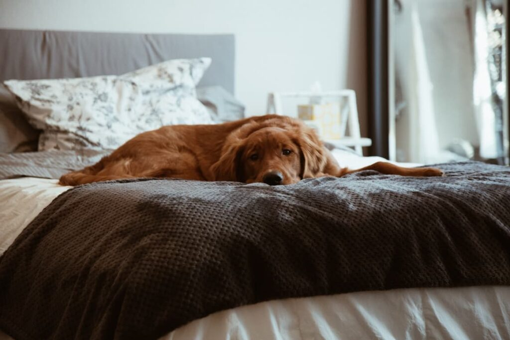 Dog asleep on a bed