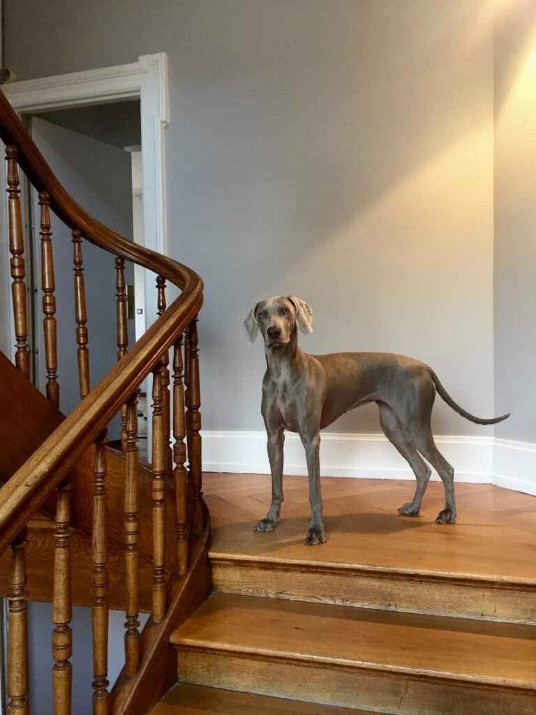 A dog at the top of a flight of stairs