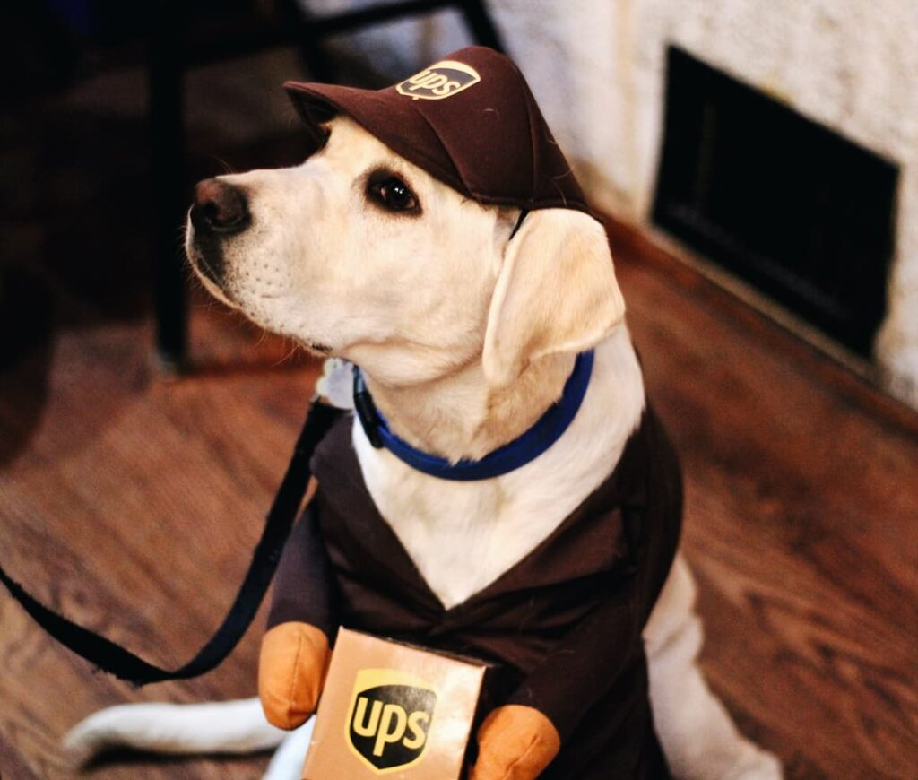 A dog dressed up in a UPS outfit. Dressing up provides enjoyment and mental stimulation for dogs