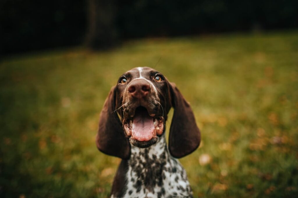 Dog looking at the camera and smiling