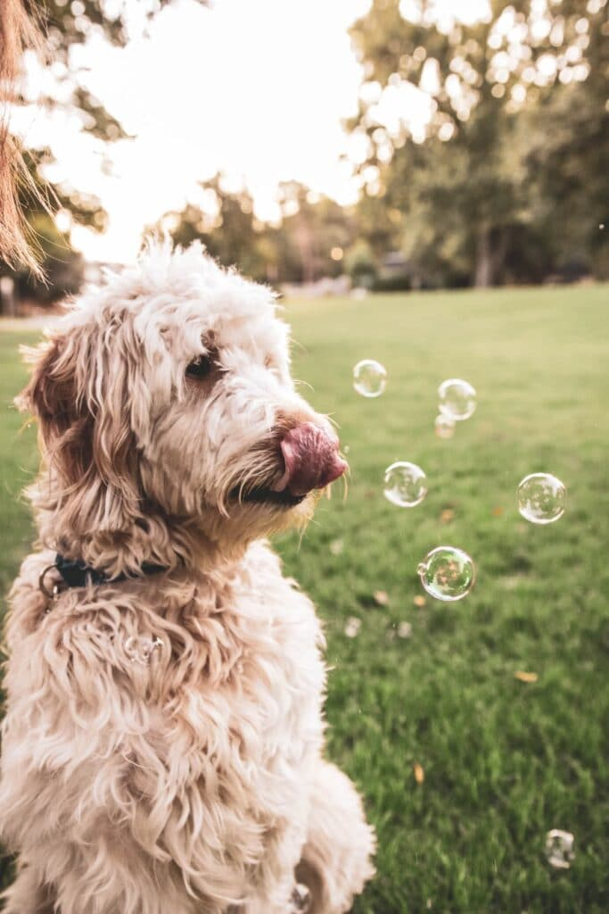 Dog with bubbles. Mental stimulation for dogs