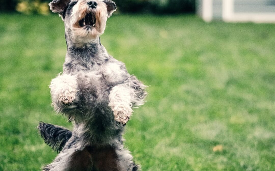 21 (Super Easy) Ways To Mentally Stimulate Your Dog