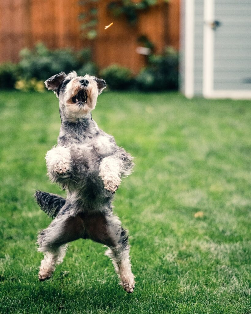 A dog dancing. How to provide mental stimulation for dogs