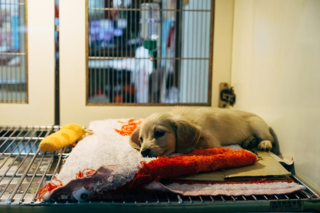 A puppy on top of a crate. C
