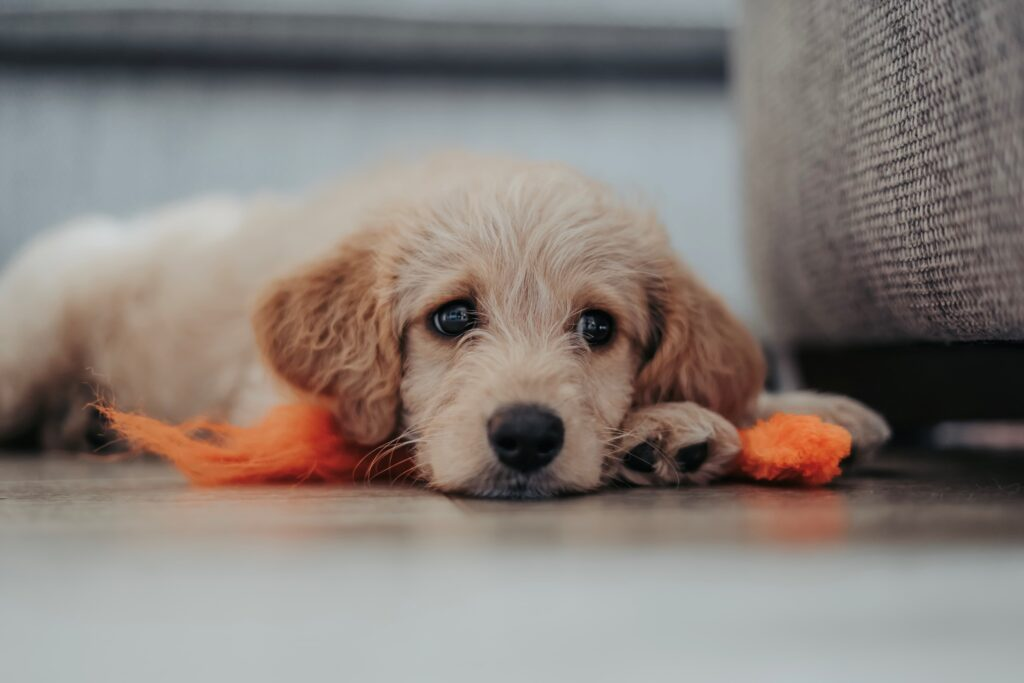 puppy laying down on a blanket outside his crate