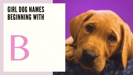 Girl Dog Names Beginning With B