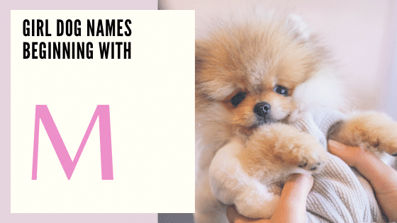Girl Dog Names Beginning With M