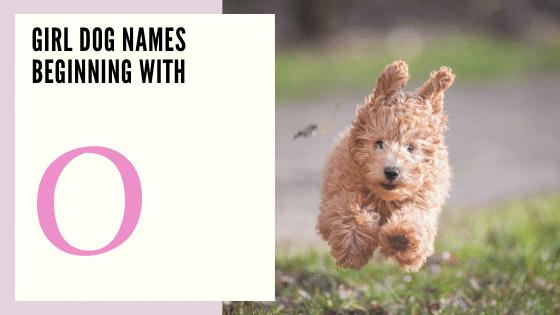 Girl Dog Names Beginning With O