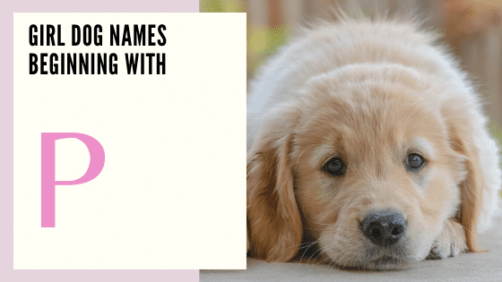 Female puppy Dog Names Beginning With P
