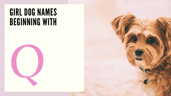 Girl Dog Names Beginning With Q