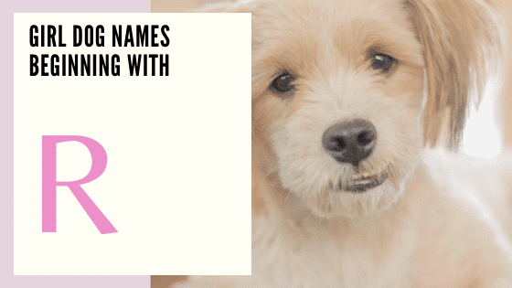 Girl Dog Names Beginning With R