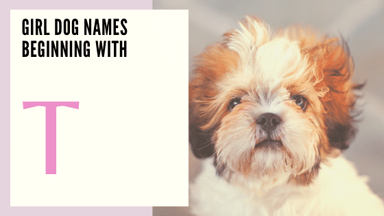 Girl Dog Names Beginning With T