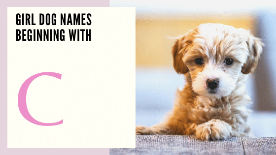 Girl Dog Names Beginning With C
