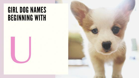 Girl Dog Names Beginning With U