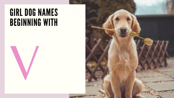 Dog Names for girls Beginning With V