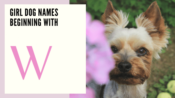 Girl puppy Dog Names Beginning With W