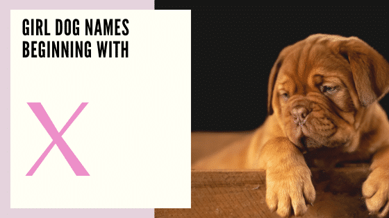 Girl Dog Names Beginning With W