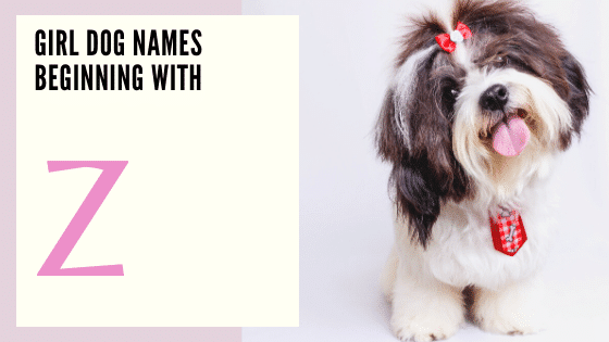 Girl Dog Names Beginning With Z