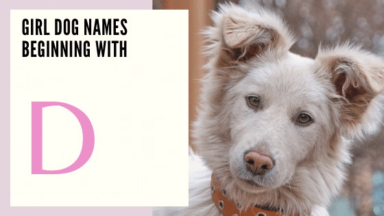 Names for female dogs Beginning With D