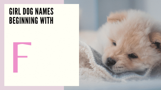 Girl Dog Names Beginning With F