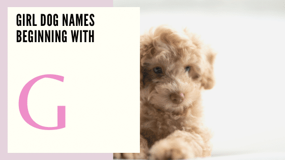 Girl Dog Names Beginning With G