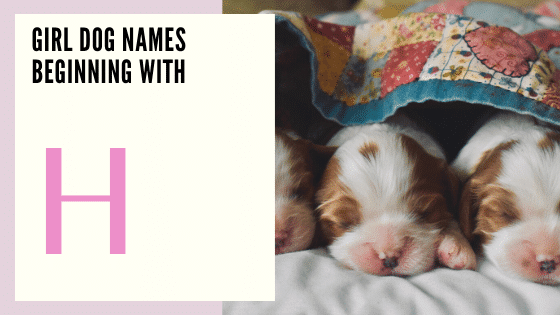 Girl Dog Names Beginning With H