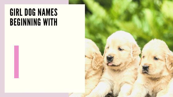 Girl Dog Names Beginning With I