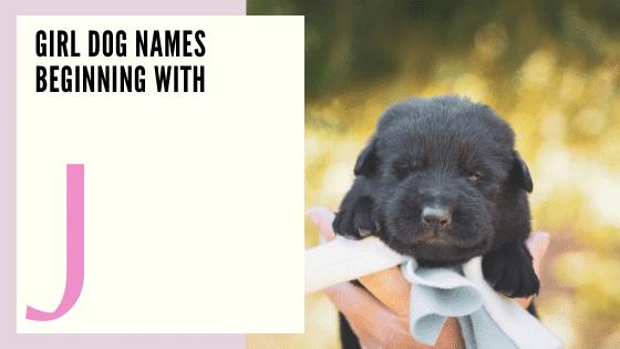 Girl Dog Names Beginning With J