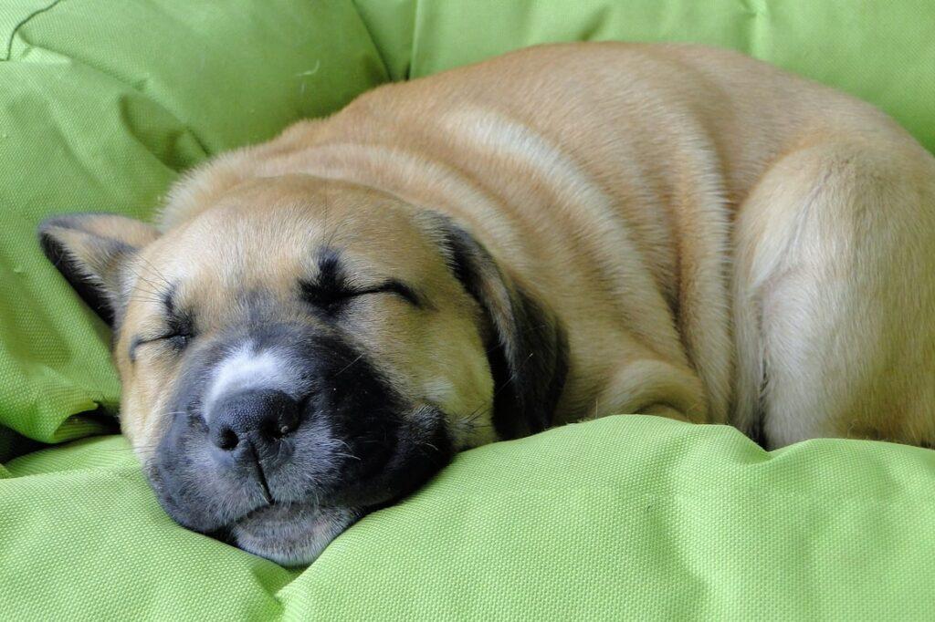 Puppy sleeping in her basket