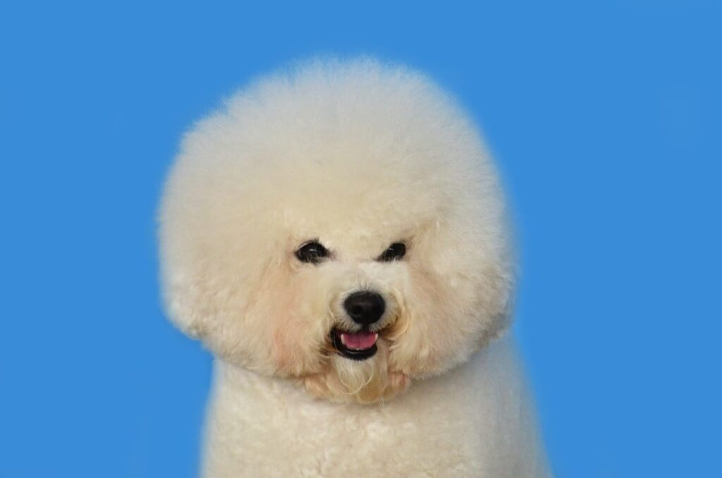 Dog with curly hair