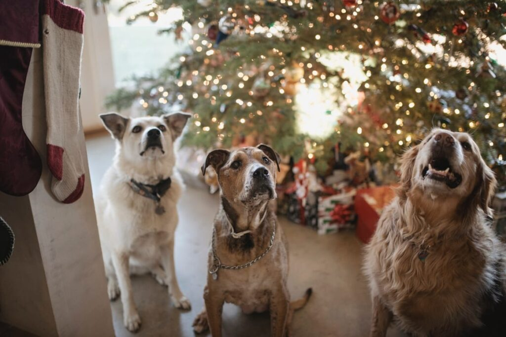 3 Dogs in front of a Christmas tree