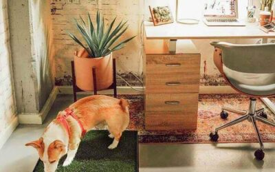 Two (Brilliant) Indoor Dog Potty Options For 2021