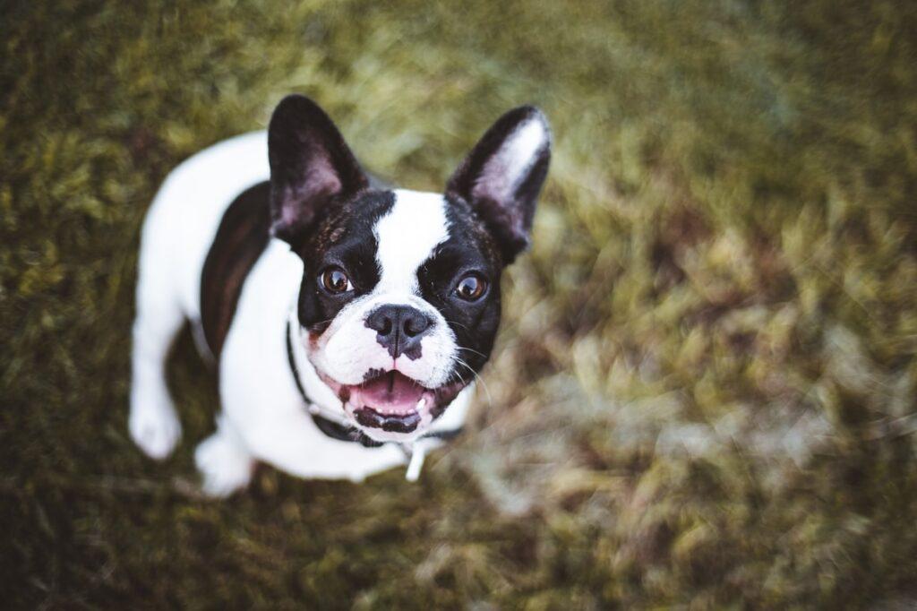 Dog on grass patch